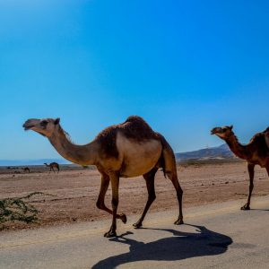 Infopaket PJ im Oman (Maskat) (inkl. CV)