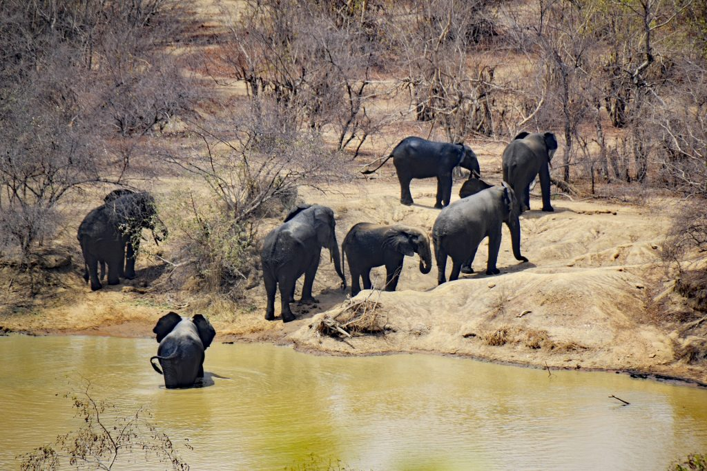 Famulatur in Ghana - Freizeitaktivitäten - Mole Nationalpark