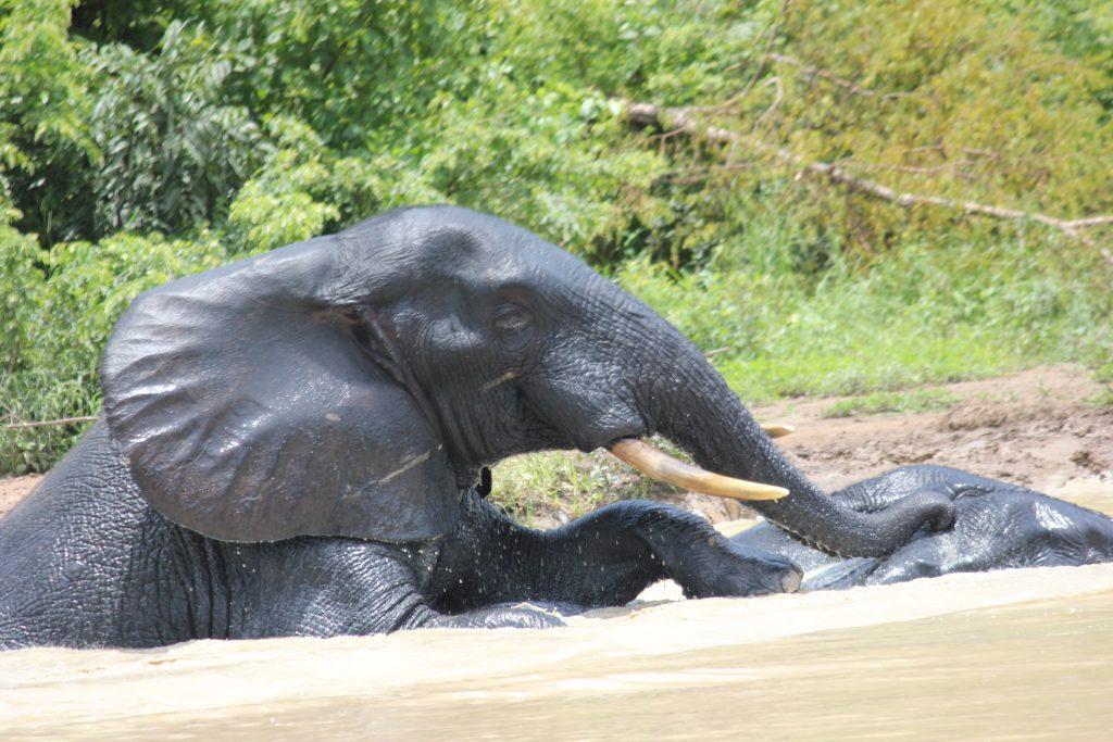 Famulatur in Ghana - Freizeitaktivitäten - Nationalpark Elefant